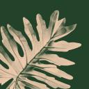 Bloomscape Gutscheine